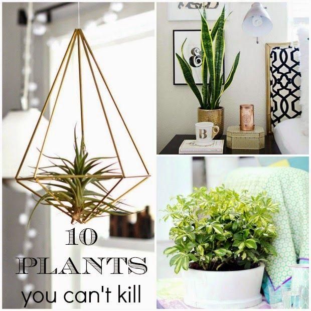 Φυτά που δύσκολα μπορείς να σκοτώσεις