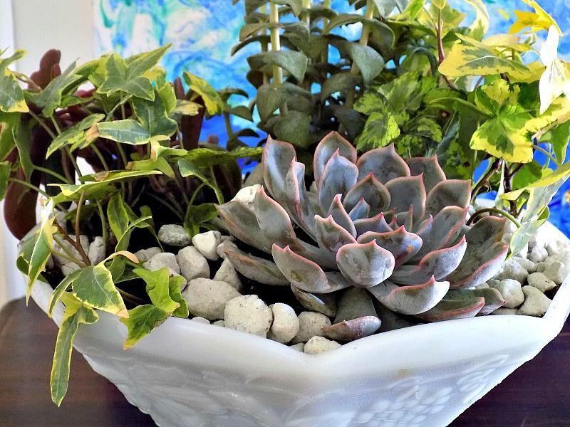 Mini succulent garden diy