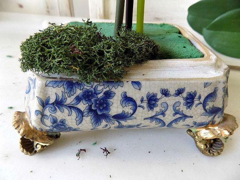Grass moss