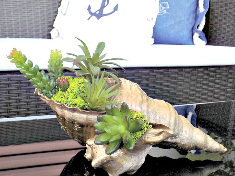Μίνι κήπος από παχύφυτα μέσα σε κοχύλι