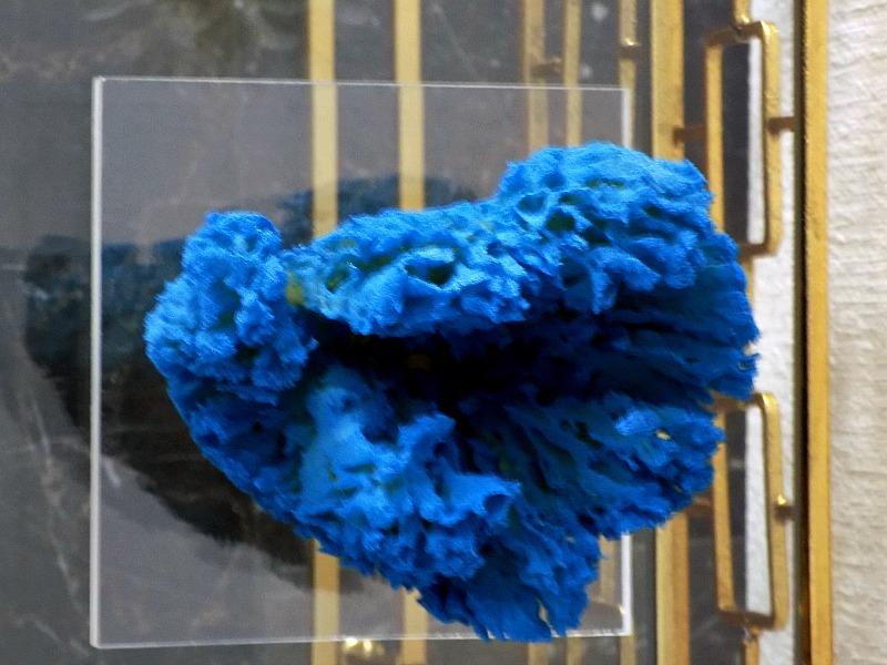 Μπλε κοράλλι σε βάση πλεξιγκλας