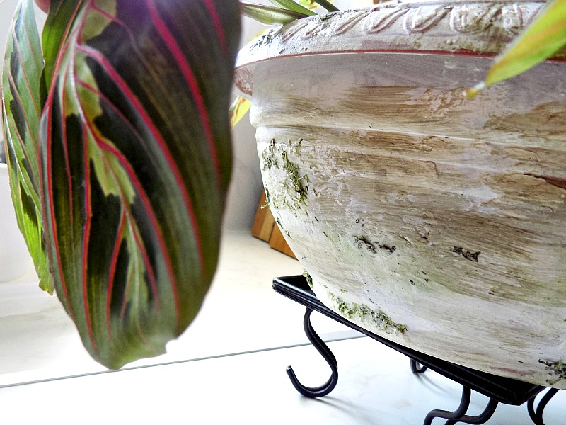 New plastic plant pot becomes old