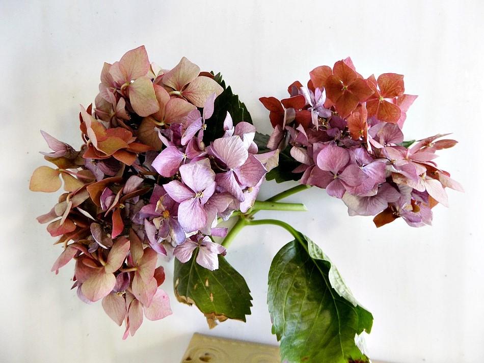 Αποξηραμένη ορτανσία για σύνθεση λουλουδιών