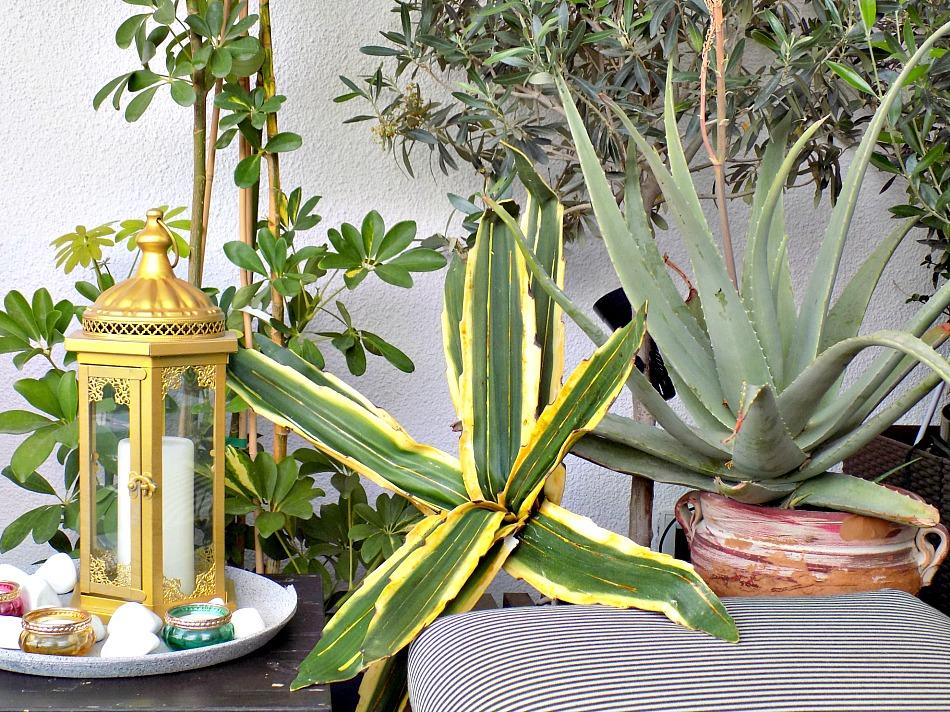 Ανακαίνιση βεράντας στο καινούργιο σπίτι, φυτά εξωτερικού χώρου