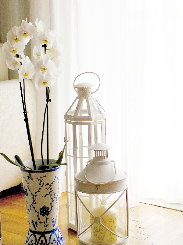 Orchids and lanterns