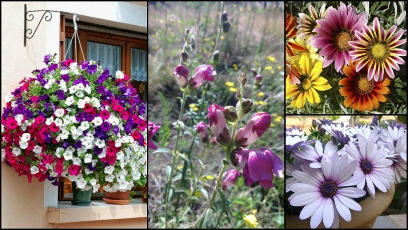 Δώδεκα από τα ομορφότερα ανοιξιάτικα λουλούδια