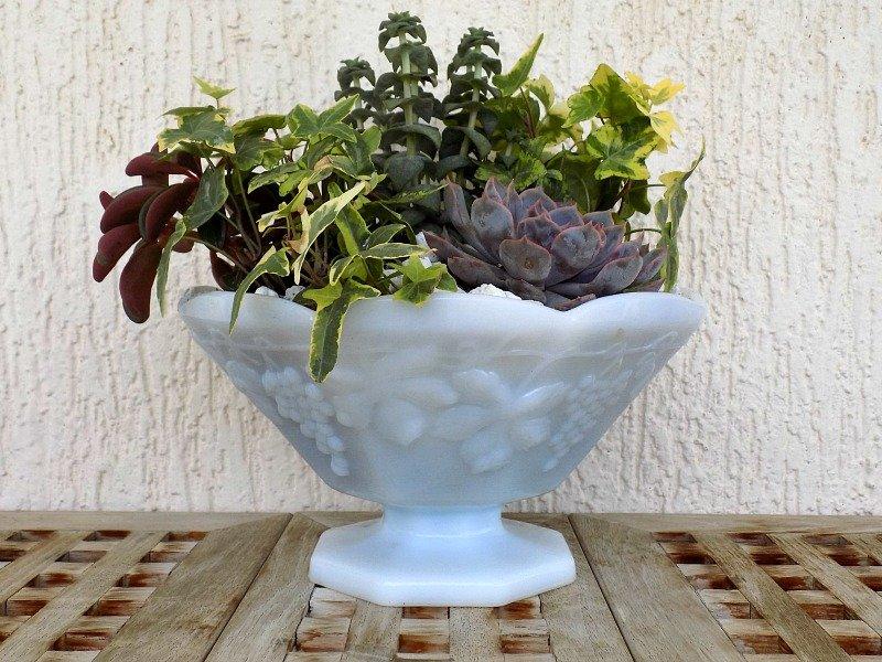 Μίνι κήπος με παχύφυτα σε milk glass φρουτιέρα