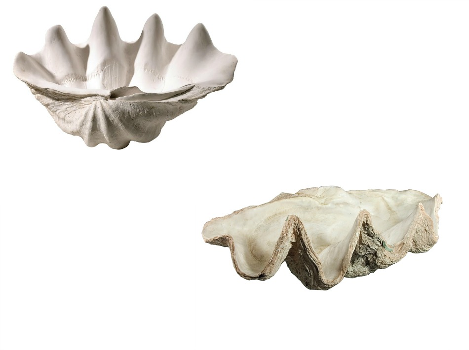 Clam shell bowls