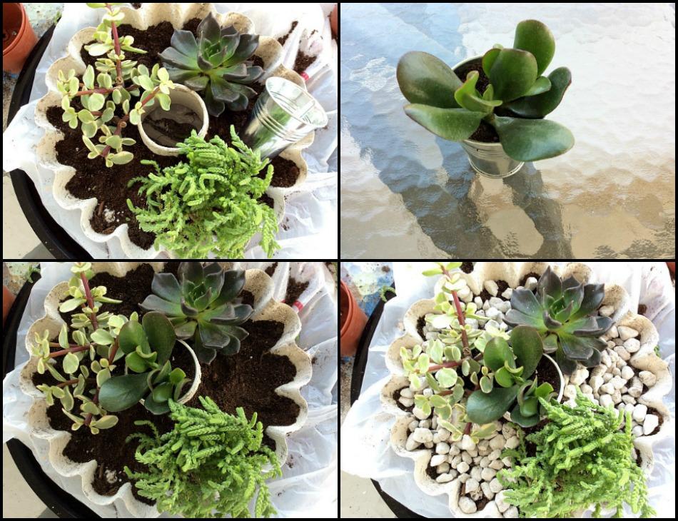 Πως να φυτέψεις παχύφυτα σε κασπό