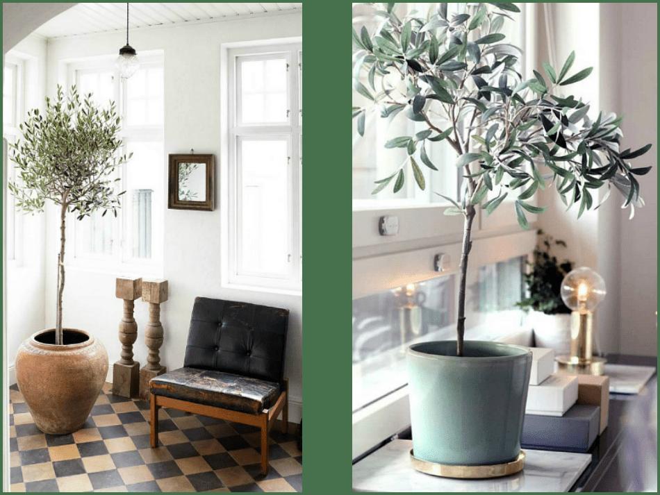 Διακόσμηση με ελιά εσωτερικού χώρου