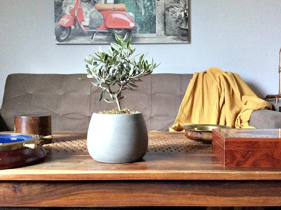 Διακοσμητική ελιά στο family room