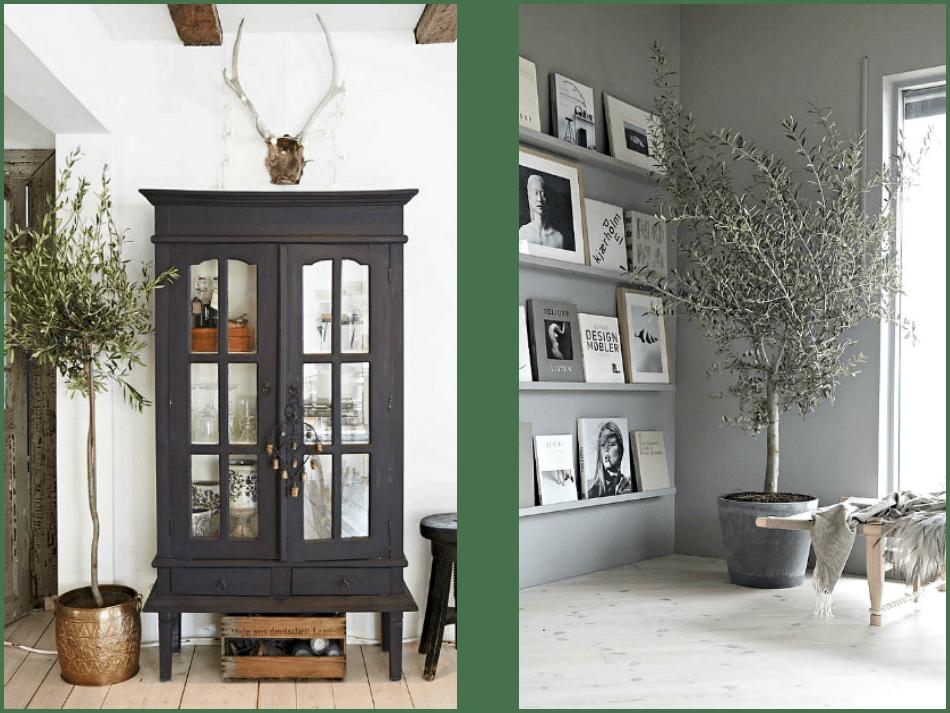 Ελιά εσωτερικού χώρου σαν διακοσμητικό στοιχείο σε roustic και minimal διακόσμηση