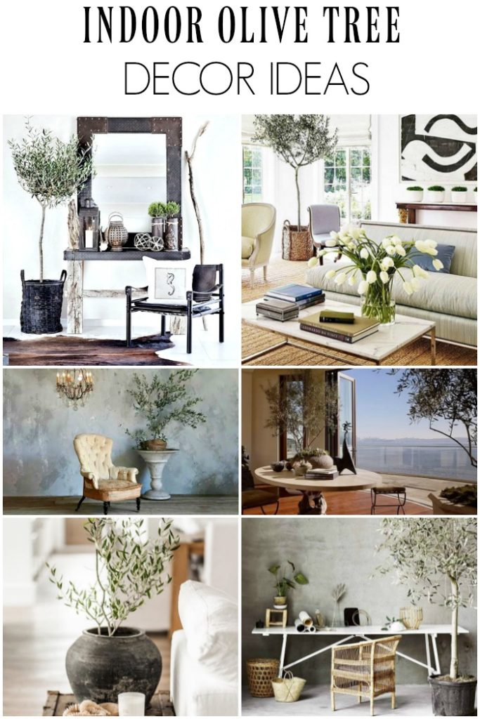 How to decorate and care indoor olive trees | Η ελιά εσωτερικού χώρου στην διακόσμηση