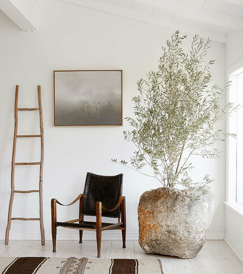 Modern roustic style olive tree decor