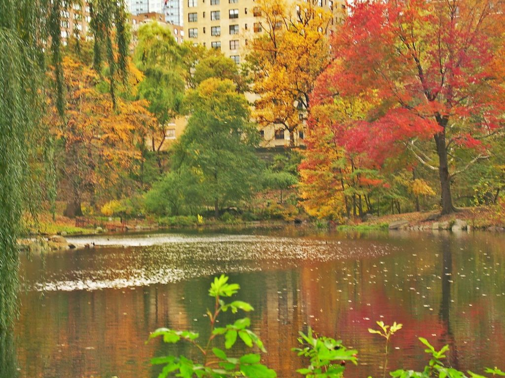 Fall colors Central Park New York