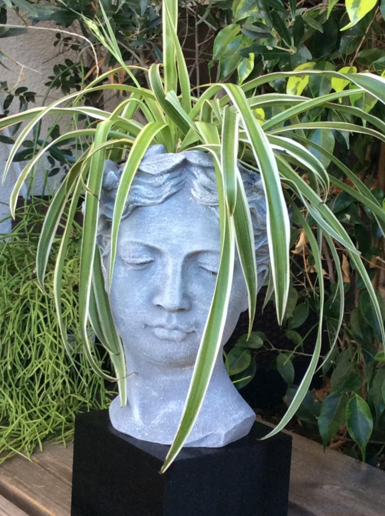 Κεραμικό κεφάλι κασπό με εφέ τσιμέντου και φυτό σαν μαλλιά